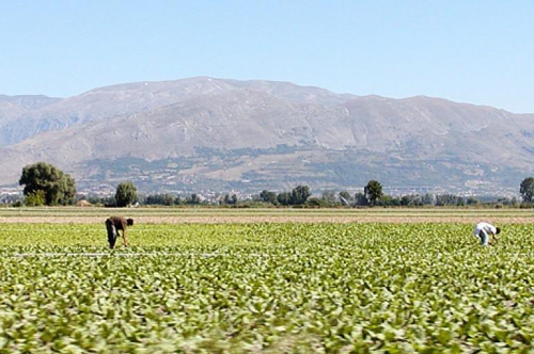 Agricoltura, immigrati e tensione sociale: l'oro del Fucino pagato con sfruttamento e caporalato