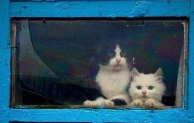 Bruxelles, la rivolta dei gattini contro la paura del terrorismo
